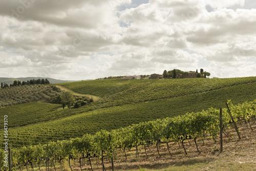 Fotobehang Wijngaard Vineyards in Tuscany