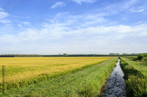 Lomellina (North Italy) Rice fields and channel Slika na platnu