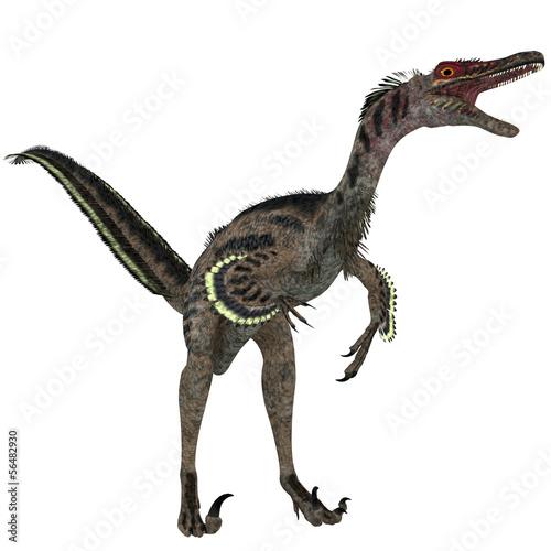 Photo  Velociraptor on White