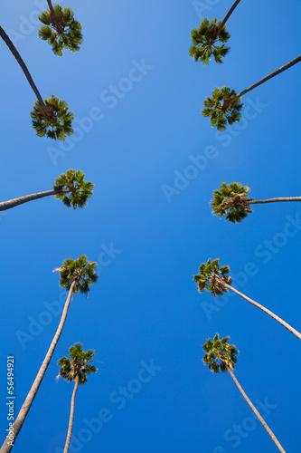 los-angeles-los-angeles-drzewka-palmowe-kalifornia-z-rzedu-typowy