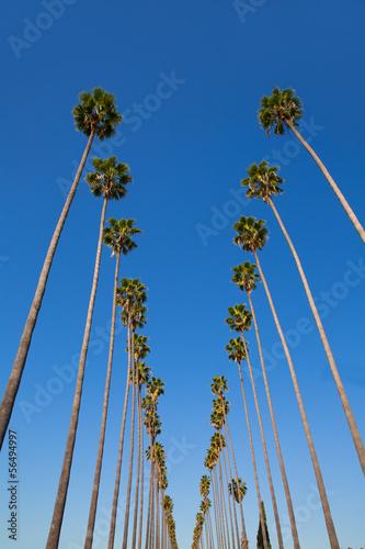 la-los-angeles-palmy-z-rzedu-typowa-kalifornia