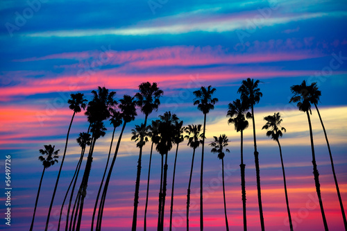 Staande foto Los Angeles California palm trees sunset with colorful sky