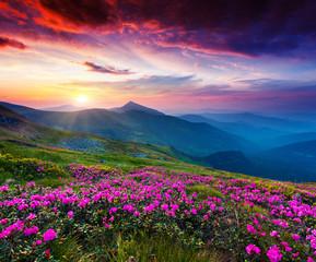 Fototapeta Góry flower