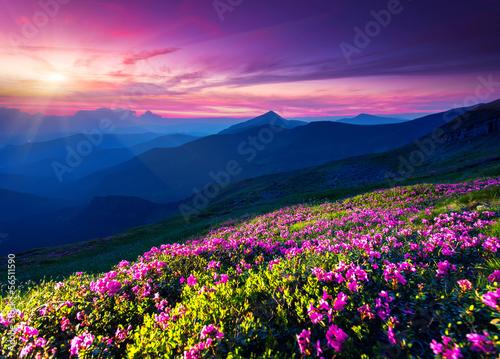 Fototapety, obrazy: flower