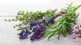 Fototapeta Lavender - Herbs