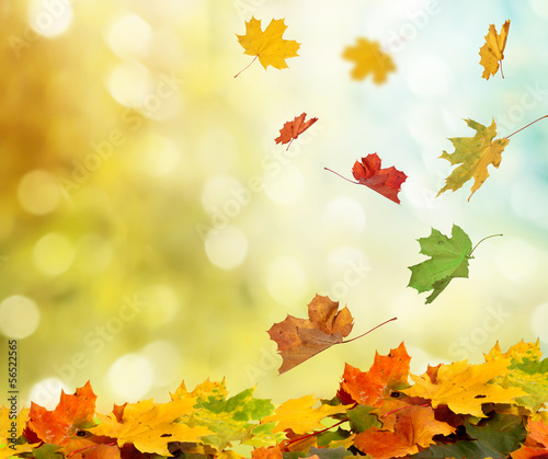 Photo sur Aluminium Jaune de seuffre autumn leaves
