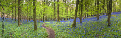 Stickers pour porte Route dans la forêt Magical forest and wild bluebell flowers