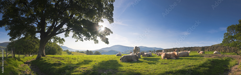 Fototapety, obrazy: Idyllic rural, Lake District, UK