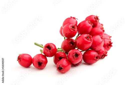 Fotografia Red hawthorn branch.