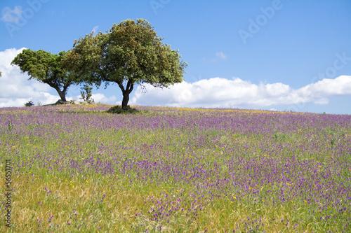 Photo Spring landscape in Alentejo, Portugal.