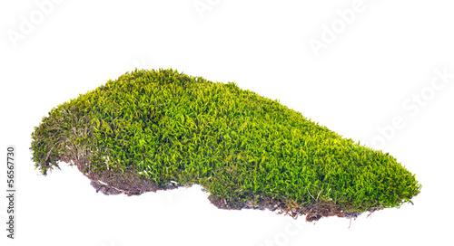 Fotografie, Obraz  green moss with brown soil on white