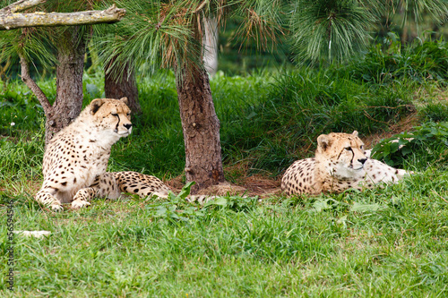 Photo Stands Kangaroo Cheeta's
