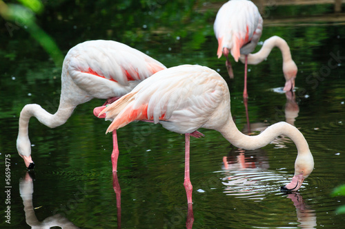 Aluminium Prints Camel Europese flamingo