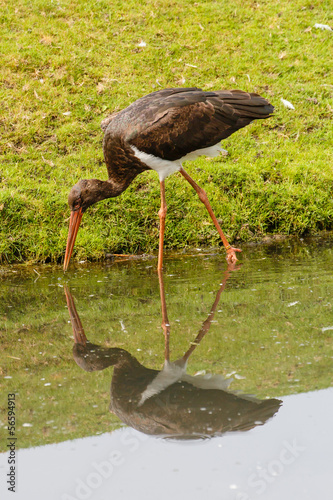 Foto auf AluDibond Kanguru Bruine Ooievaar