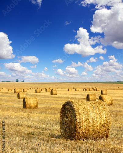 Foto auf Gartenposter Landschappen harvested bales of straw in field