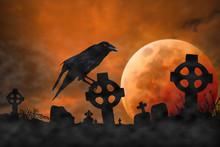 Cuervo En Cementerio