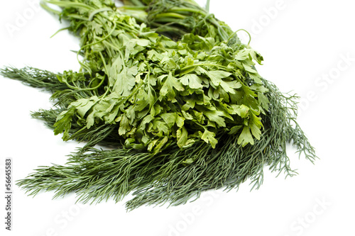 Garden Poster Plant Frische Grüne Blattpetersilie mit Grünem Dill