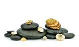 Fototapeta Kamienie - Muszle na kamieniach do spa