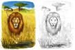 canvas print picture - Safari - lion - coloring page