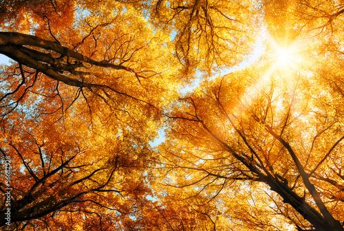 jesienne-slonce-swieci-przez-wierzcholki-drzew