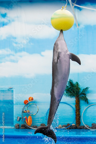 dolphin playing with ball in water park, performance, show Poster