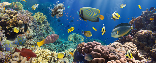 Coral and fish - 56728717