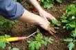 Leinwanddruck Bild - Jardinage eco durable