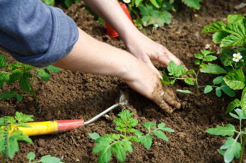 Fototapeta Jardinage eco durable
