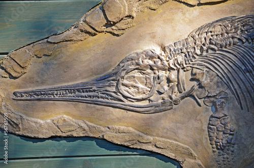 Photo  ichtyosaurus fossil