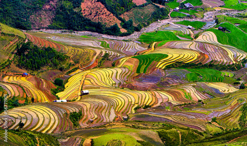 Garden Poster Rice fields Terraced rice fields