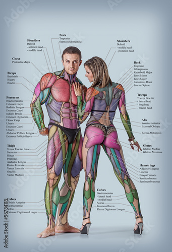 Anatomy of male and female muscular system Canvas Print