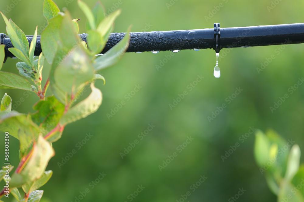 Fototapety, obrazy: Drip Irrigation System Close Up