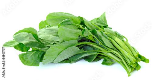 Fototapety, obrazy: Chinese kale vegetable on white background