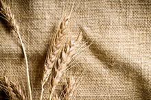 Wheat On Linen Background