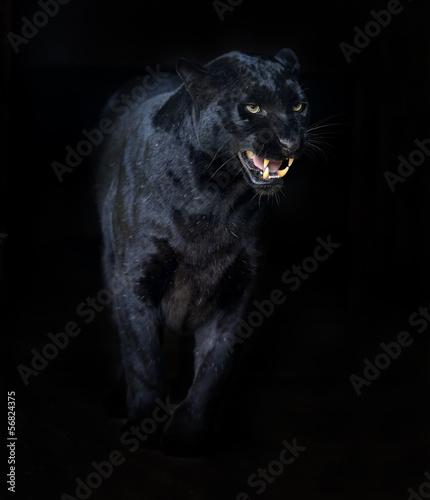 Canvas Prints Panther Amur Leopard