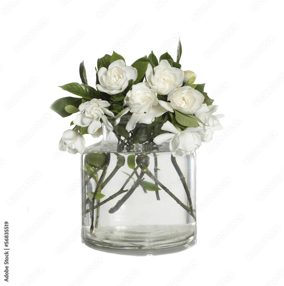 bunch of White Gardenia Blossom in glass vase