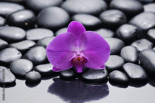 Papiers peints Spa pink beautiful orchid on beach stones background