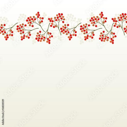 Fotografie, Obraz  czerwona jarzębina poziomy border z cieniem