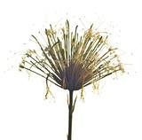 Sansevierias flower - 56845713