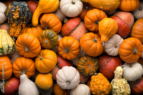 Fotografie, Obraz  Pumpkins background