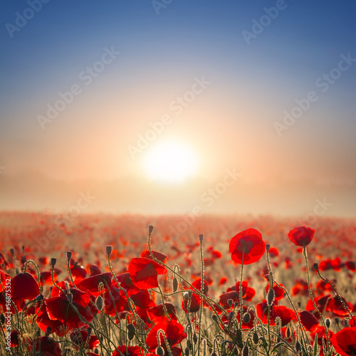 Foto op Aluminium Poppy red poppy field at the early morning