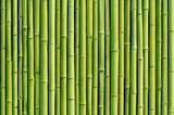 Fototapeta Bedroom - green bamboo fence background