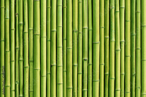 Poster Bamboe green bamboo fence background