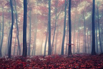 Naklejka Mystic forest