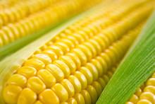 Corn Macro