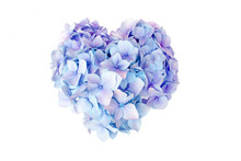 Hydrangea Flower In Heart Shape