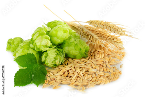 Fotografía  Fresh green hops and barley, isolated on white
