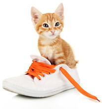 Cute Little Red Kitten In Shoes Isolated On White