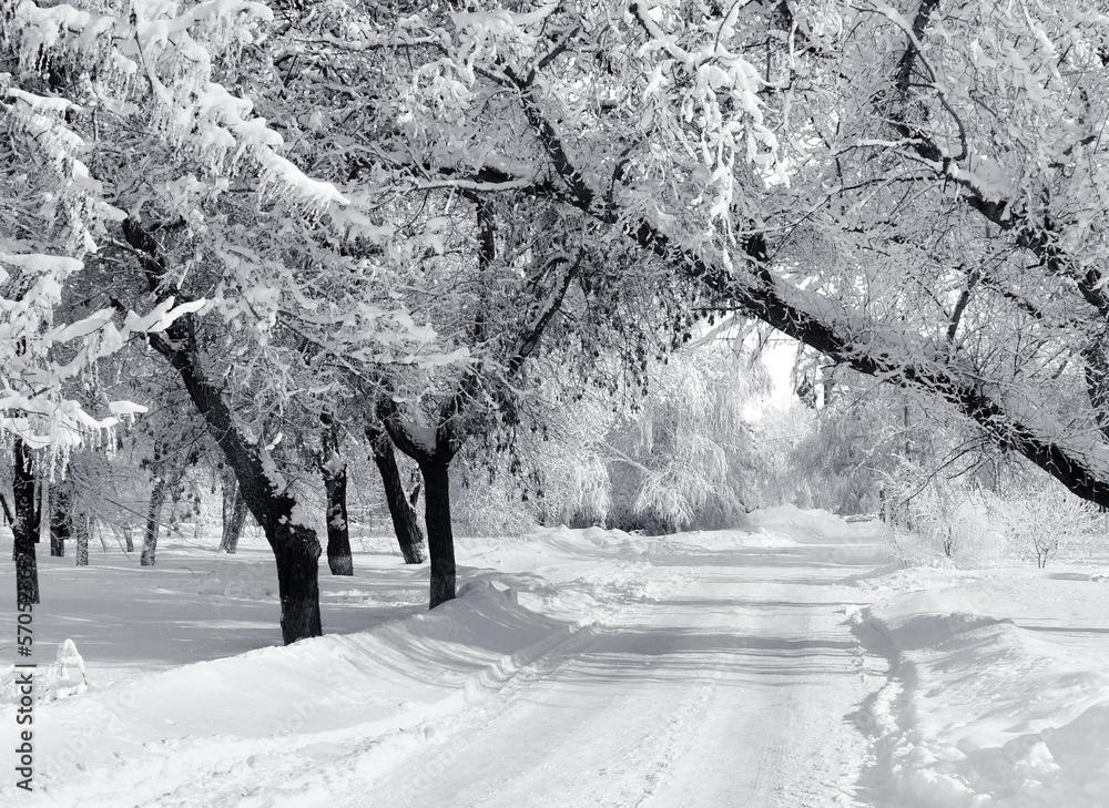 Foto-Leinwand ohne Rahmen - Winter park, scenery