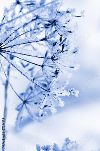 Fotografie, Obraz  Winter floral background